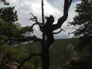Tree at Dream Canyon