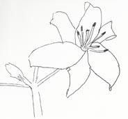 Lily4web
