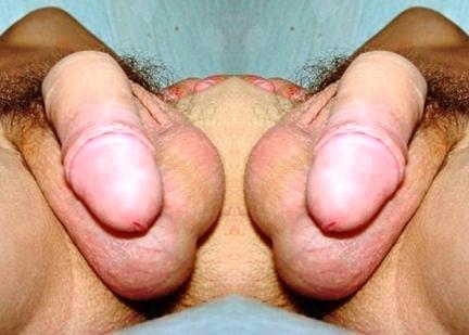 cocksflipped4web